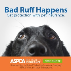 AORN Members get discounts on pet insurance