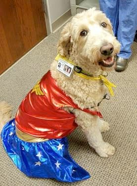 Lulu the Perioperative Therapy Dog